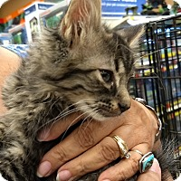 Adopt A Pet :: Curly - La puente, CA