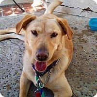Adopt A Pet :: Dixie - San Diego, CA