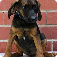 Adopt A Pet :: Clarence - Waldorf, MD