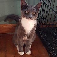Adopt A Pet :: Jake Blues - Dewitt, MI