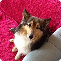 Adopt A Pet :: Jasmine (Adoption Pending) - Pittsburgh, PA