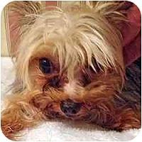 Adopt A Pet :: Travie - Tallahassee, FL