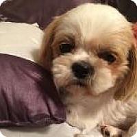 Adopt A Pet :: Peanut - Hilliard, OH