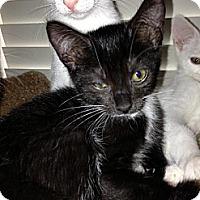 Adopt A Pet :: Renny - Royal Palm Beach, FL
