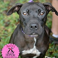 Adopt A Pet :: Prue - Bradenton, FL