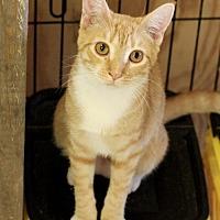 Adopt A Pet :: Pita - Hammond, LA
