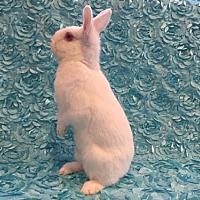 Adopt A Pet :: Pheobe - Columbus, OH