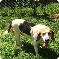 Adopt A Pet :: Hobbs - Dumfries, VA