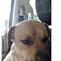 Adopt A Pet :: Billy - Fort Wayne, IN