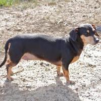 Adopt A Pet :: Lolita - Statesboro, GA
