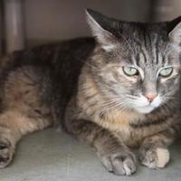 Adopt A Pet :: Savannah - Boise, ID