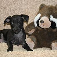 Adopt A Pet :: Enchilada - Washington, DC