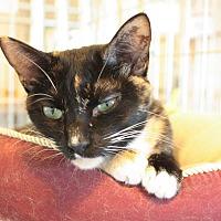 Adopt A Pet :: Merry - McPherson, KS