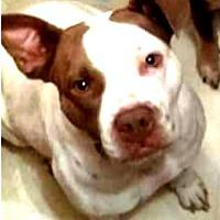 Adopt A Pet :: Izzy - Pensacola, FL