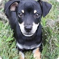 Adopt A Pet :: Chucky - Staunton, VA