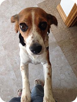 Beagle Mix Dog for adoption in Hazel Park, Michigan - Betty