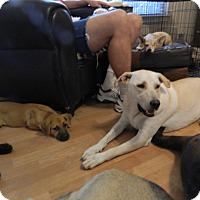 Adopt A Pet :: Sandy - Bulverde, TX