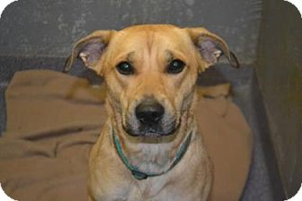 Shepherd (Unknown Type) Mix Dog for adoption in Edwardsville, Illinois - Daphne