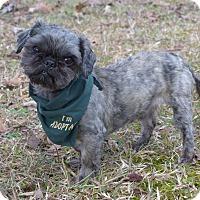 Adopt A Pet :: Quinn - Mocksville, NC