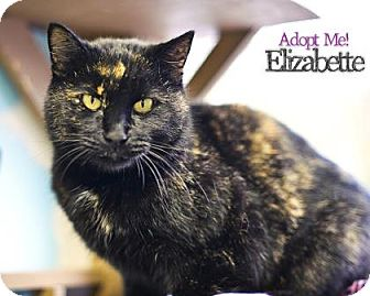 Domestic Shorthair Cat for adoption in West Des Moines, Iowa - Elizabette