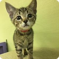 Adopt A Pet :: Ivy - Medina, OH