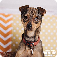 Adopt A Pet :: Flo - Portland, OR