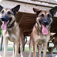 Adopt A Pet :: Lavern & Shirley - Fort Worth, TX