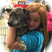 Adopt A Pet :: Fern - Ijamsville, MD