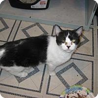 Adopt A Pet :: Pippi **FIV+** - Glendale, AZ