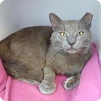 Adopt A Pet :: Mooney - Waxhaw, NC
