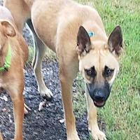 Adopt A Pet :: Addison - Shelburne, VT