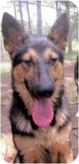 German Shepherd Dog Mix Dog for adoption in Albany, Georgia - Lady