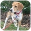 Photo 1 - Beagle Dog for adoption in Waldorf, Maryland - Bebe