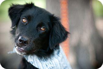 Border Collie Mix Dog for adoption in Muldrow, Oklahoma - Pheobe