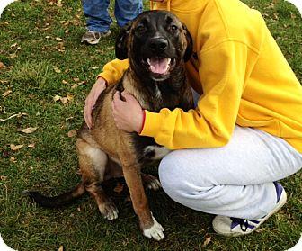 Shepherd (Unknown Type) Mix Dog for adoption in Indianola, Iowa - Hank
