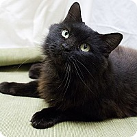 Adopt A Pet :: Elvira - Chicago, IL