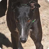 Adopt A Pet :: Dragon - Pearl River, LA