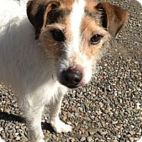 Adopt A Pet :: Annabelle - Rhinebeck, NY