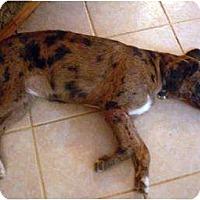Adopt A Pet :: Skeeter - Harrison, AR