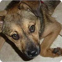 Adopt A Pet :: BIFF - Raleigh, NC