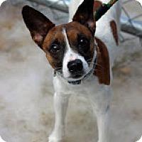 Adopt A Pet :: Lil Dunkin - Tinton Falls, NJ