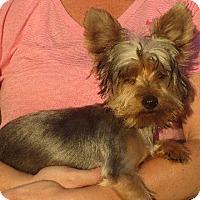 Adopt A Pet :: Ernest - Greenville, RI