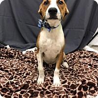 Adopt A Pet :: Murph - Baton Rouge, LA