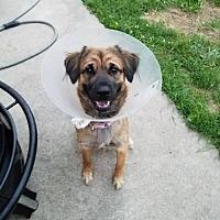 Adopt A Pet :: Belle - Florence, KY