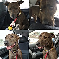 Adopt A Pet :: PURLA - Courtesy - Los Angeles, CA