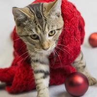 Adopt A Pet :: Twiggy - Bedford, IN