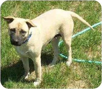 German Shepherd Dog Mix Dog for adoption in Lytle, Texas - Lola