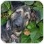 Photo 4 - German Shepherd Dog Mix Puppy for adoption in Los Angeles, California - Aimee von Diaz