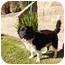 Photo 2 - Border Collie/Spaniel (Unknown Type) Mix Dog for adoption in El Cajon, California - Sparky