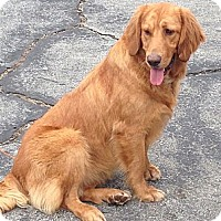 Adopt A Pet :: Lady - Bonded to Brandy - New Canaan, CT